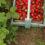 Pick Your Own Berries in Northeast Wisconsin