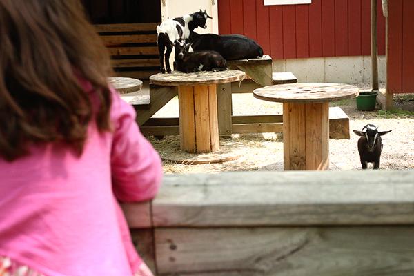Plamann Park Childrens Farm Appleton