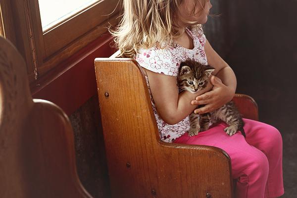 Mulberry Lane Farm Cat