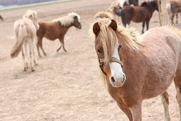 Mulberry Lane Farm Horses