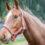 Horseback Riding in and around Northeast Wisconsin