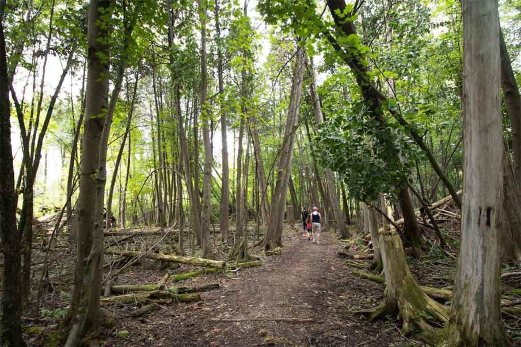 Buboltz Nature Preserve