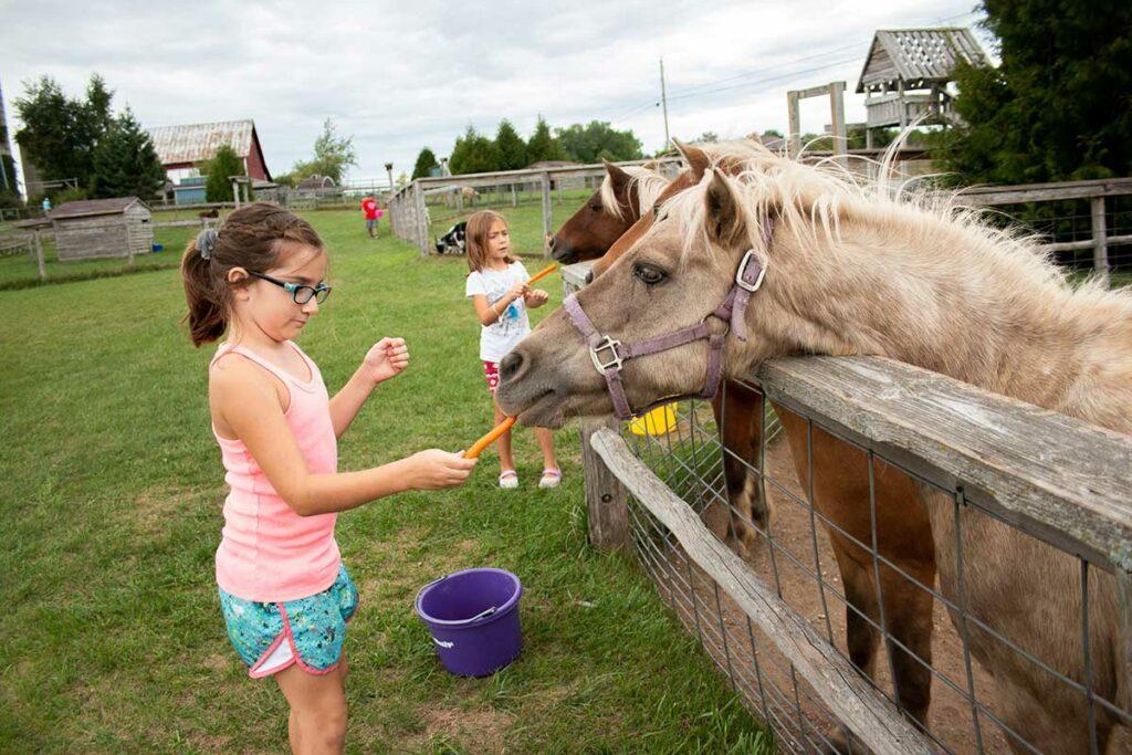 Plum loco, door county petting farm