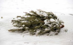 Christmas Tree Recycling