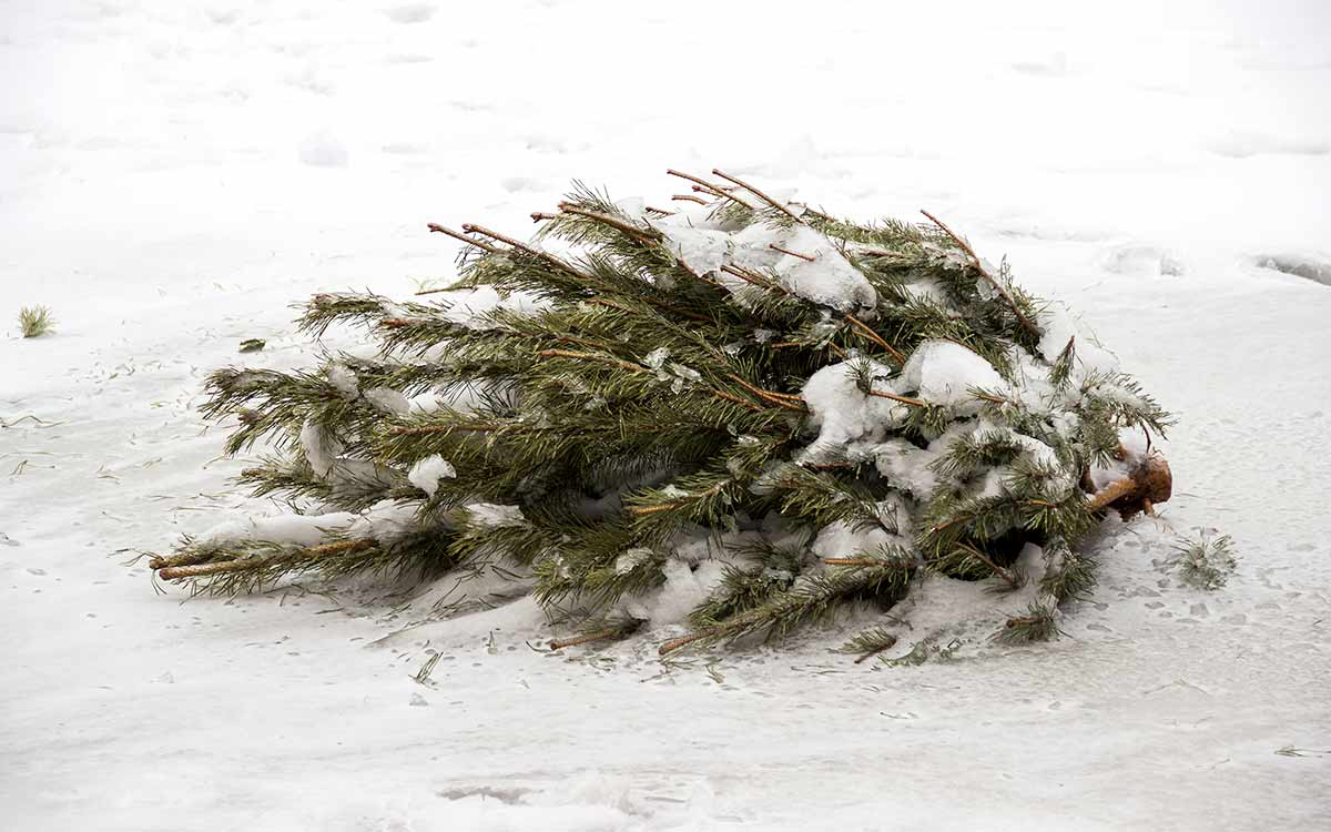 Kaukauna Garbage Pickup Christmas 2021 After The Holidays Now What Christmas Tree Recycling In The Fox Valley