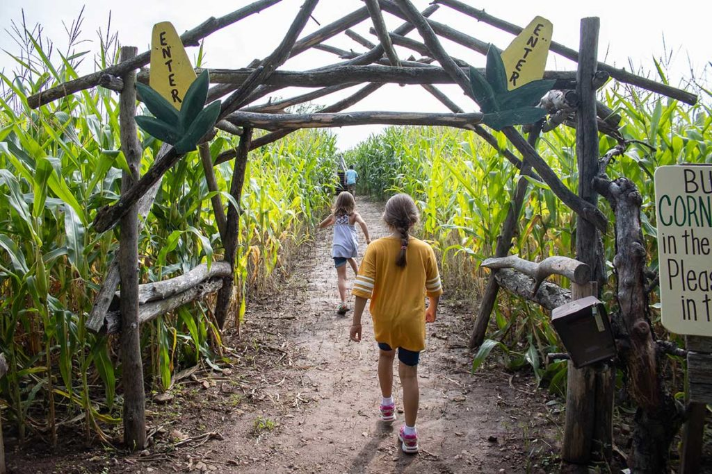 Little Farmer Corn Maze