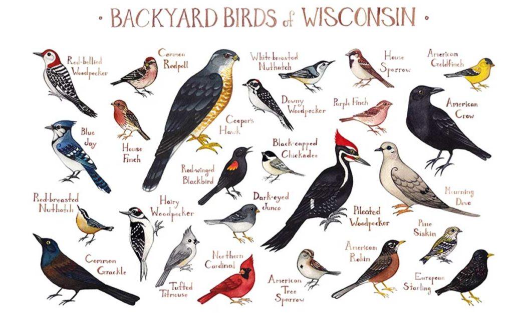 Wisconsin Backyard Birds