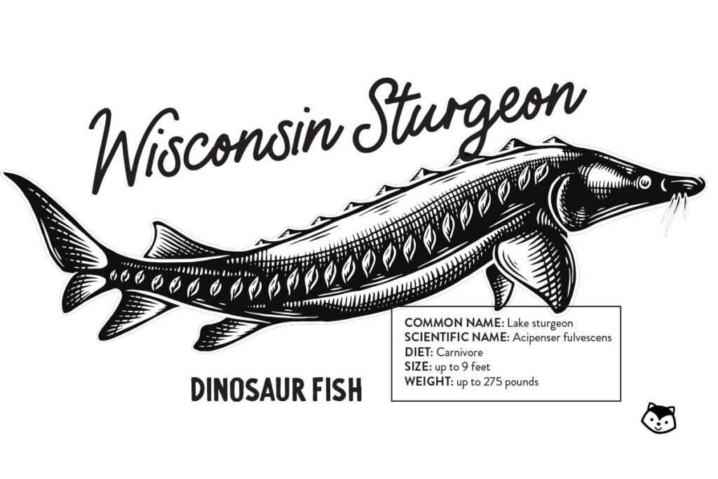 Wisconsin Sturgeon