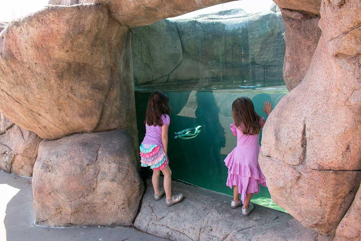 NEW Zoo Green Bay