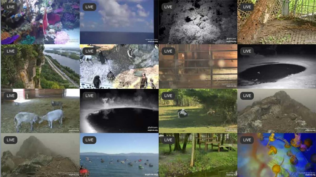 explore.org live web cams