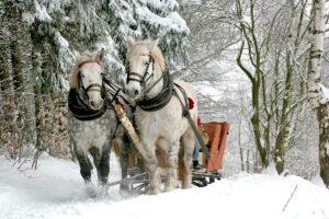 wisconsin horse sleigh rides