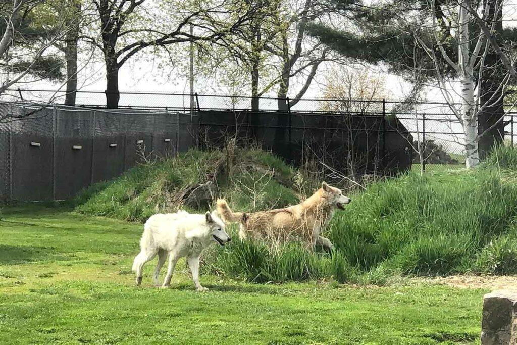 Ochsner Park Zoo Baraboo