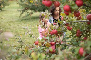 Hofackers Apple Orchard