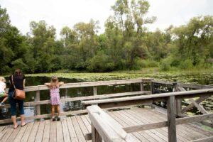 turtle pond at Bubolz Nature Center in Appleton