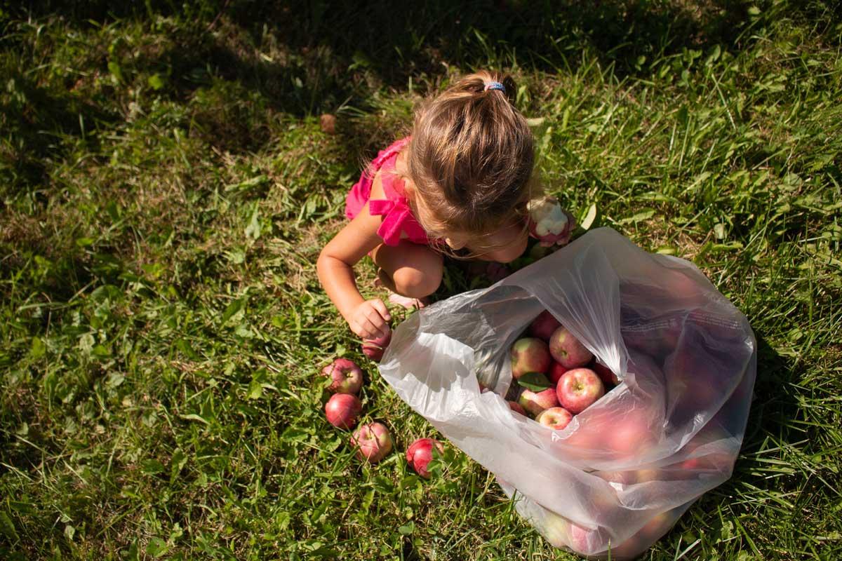 Star Orchard Apples Kaukauna