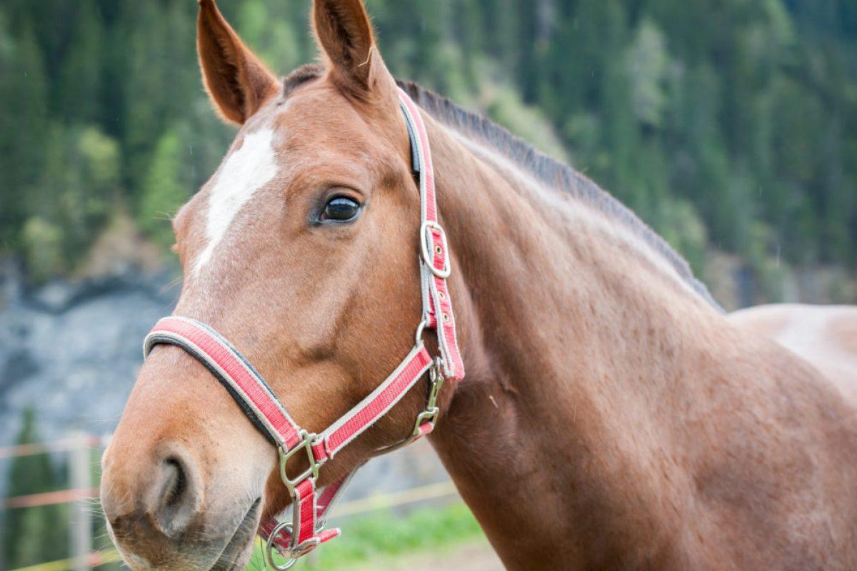 Horseback Riding Northeast Wisconsin